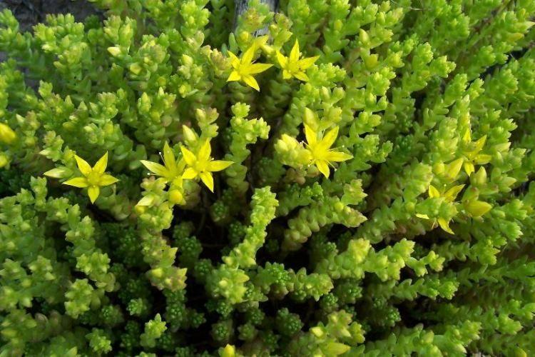 Environmental Benefits The Igreen Nyc Ischool S Green Roof